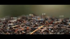 蚂蚁动态线