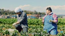 Aflac 保险广告 周末农业篇 日本2020