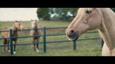 网络-ATG 赛马网站广告 Singing Horses Putti Putti[欧美